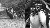 PenguinRevolution.png