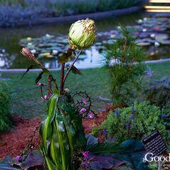 Merriwick Flower | Best Flower Site