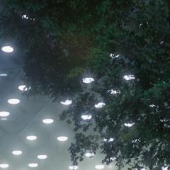 Деревья, растущие в дендрарии.