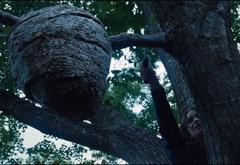Katniss cortando la rama que sostiene el nido de rastrevíspulas