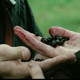 Морник - ядовитые ягоды, которые прмогли победить Китеисс и Питу