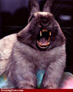 Rabbit mutt