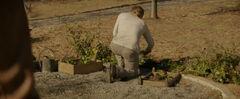 Peeta plantando Primulas