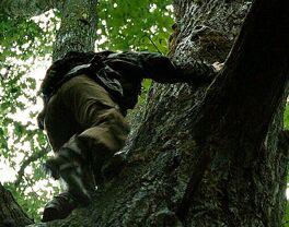 Китнисс забирается на дерево