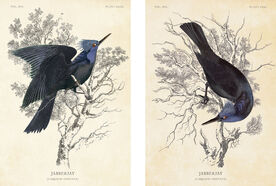 Jabberjays art