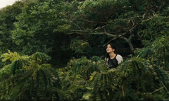 Katniss sobre los arboles en la arena de los 75° Juegos del Hambre