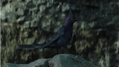 Mockingjay (bird) | The Hunger Games Wiki | FANDOM powered