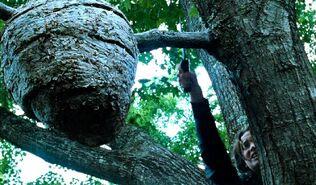 Китнисс и гнездо