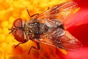 3515245-red-fly