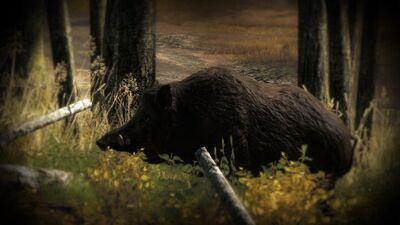 Wildschwein02