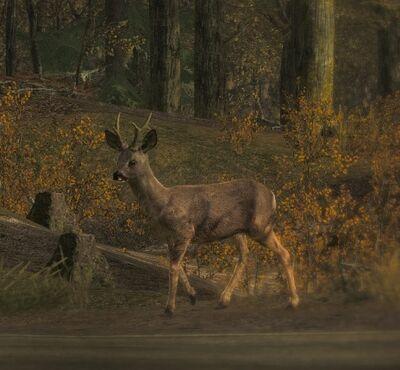 Roe Deer1