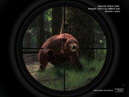 Schwarzbär Angriff