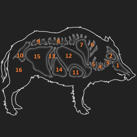 Anatomie Wildschwein