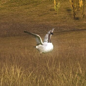 Canada goose brown leu