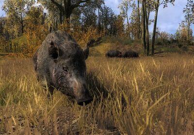 Wildschwein01
