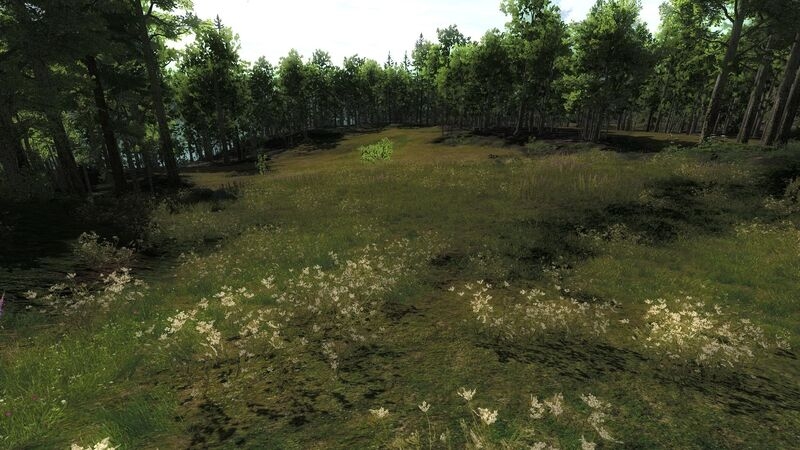 Wedge field2