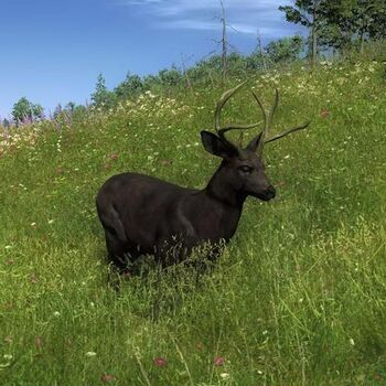 Species MD B melanistic