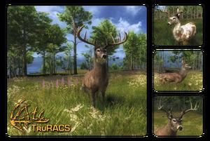 Species whitetail deer 700