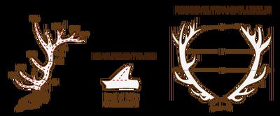 Antlers rt elk