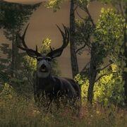 Mule Deer Hauptseite
