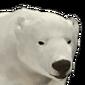 Polar bear male common