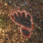 Spur Black Bear flüchtend