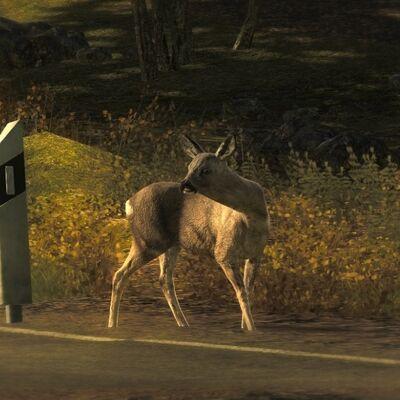 Roe Deer8