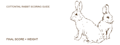 Cottontail rabbit score