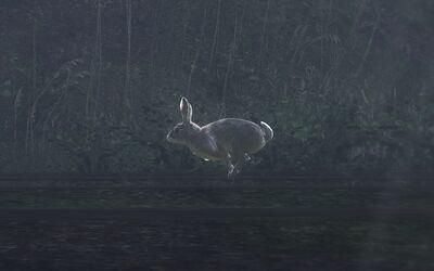 Rabbit flüchtend