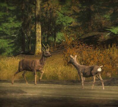 Roe Deer7