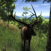 Species ELK B common