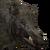 Wild boar male common