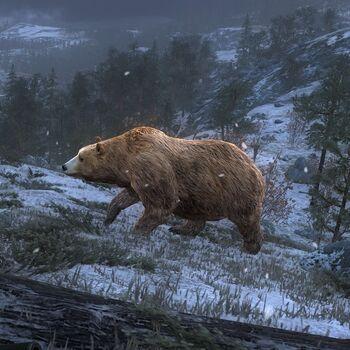 Brown bear gold