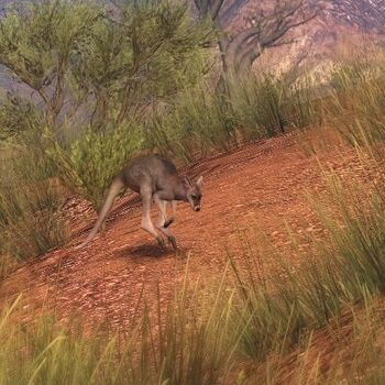 Red kangaroo hauptseite