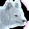 Arctic fox male common