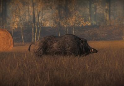Wildschwein03