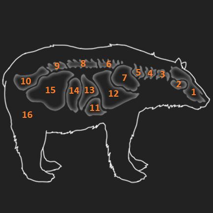 Anatomie Schwarzbär