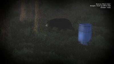 Schwarzbär am Köderfass