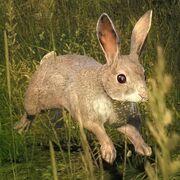 Kaninchen Hauptseite