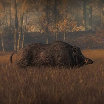 Wildschweindunkel