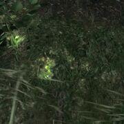 Spur Cottontailrabbit flüchtend