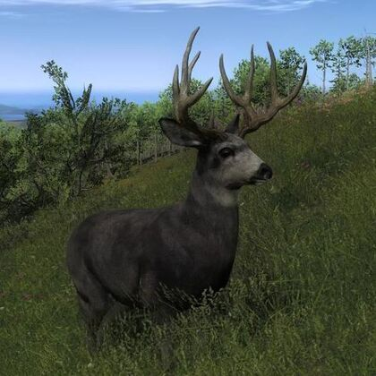 Species MD B common