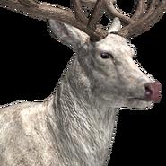 Red deer male albino