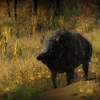 Wildschweinhell