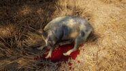 Thehuntercotw Wild Boar Blackgold