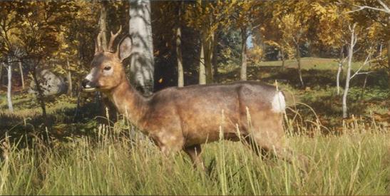 File:Roe deer.jpg