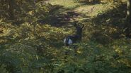 Male roe deer behind