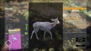 Dilute Mule Deer Doe