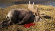 Moose Common