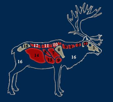Reindeer organs